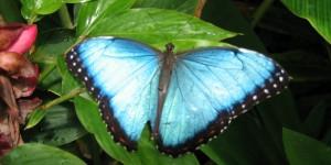 Butterfly-leaf-wallpaper