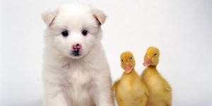 cute-friends-domestic-animals-wallpaper-2785606-fanpop-s-.-ibackgroundz.com_